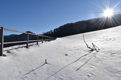 PHO_0141 (Dimi_M) Tags: neige soleil nature foret