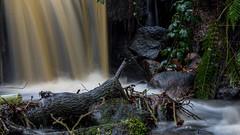 2017-01-17 Rivelin-7399.jpg (Elf Call) Tags: nikon rivelin river yorkshire water stream 18105 sheffield steppingstones waterfall d7200 blurred