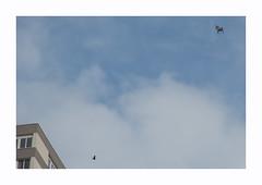 Pégase (hélène chantemerle) Tags: bâtiments cheval ciel extérieur oiseau pigeon rue urbain chèvre building flying bird horse sky blue clouds white