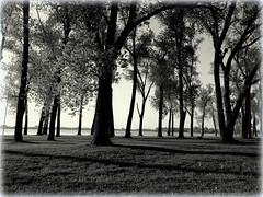 Tree World (gummybear402) Tags: trees blackandwhite white black nature landscape nikon nebraska afternoon vignette l330