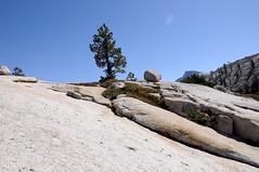 Tenacious greenery (karissima) Tags: california unitedstates yosemitenationalpark olmsteadpoint