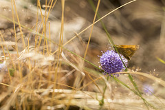 Breeze (Gi_shi) Tags: flower nature 35mm butterfly nikon breeze fiore farfalla venticello d7200