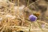 Breeze (Gi_shi) Tags: flower nature 35mm butterfly nikon breeze fiore farfalla venticello d7200
