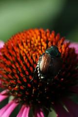 Insect (historygradguy (jobhunting)) Tags: plant ny newyork flower macro animal insect upstate hydepark dutchesscounty hudsonvalley franklinrooseveltnationalhistoricsite