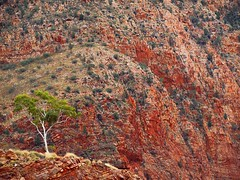 "a lone ghost gum guarding the gorge • <a style=""font-size:0.8em;"" href=""http://www.flickr.com/photos/44919156@N00/20293800660/"" target=""_blank"">View on Flickr</a>"