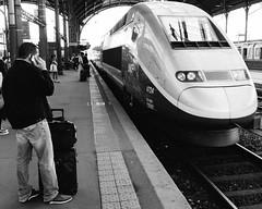 One year ago today: TGV de Strasbourg  Paris (emrold) Tags: france train wide strasbourg alsace tgv elsass garedestrasbourg 1125secatf80 x100s fujifilmx100s eurotrip2014 2014emrold|ericdelorme