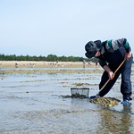 Gathering of shells in Noirmoutier thumbnail