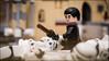 """I fear nothing... "" #LEGO #STARWARS (Alan Rappa) Tags: chirrutimwe astarwarsstory a6300 disney lego legominifigures legophotography legostarwars minifigs minifigures rebellion rogueone sony sonya6300 starwars stormtrooper toys tweetme"