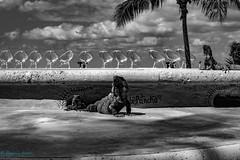 Iguana (BS_86) Tags: canon eos 6d lightroom blackwhite monochrom mexico mexiko vacation ferien travel reisen tiere pool chairs palmen palmtrees animals iguanas leguane explore reptile ngc