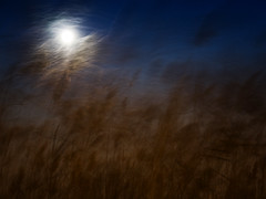 Sea Grass and the Super Moon (bjg_snaps) Tags: moon supermoon abstract windy wesufferforourart seagrass