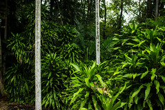 Tropical Vegetation (betadecay2000) Tags: george brown darwin botanic gardens northern territory australia february 2014 botanischer garten australien februar pflanzen plants botanisch palmen bäume baum regen rain rainy day outdoor pflanze wolke himmel
