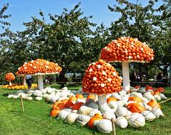 0634 Kürbisgemüse anders! Pumpkin vegetables differently! (Fotomouse) Tags: fotomouse flickr margrit kürbis outdoor draussen natur nature gemüse farbig 1001nights vegetable pumpkin cucurbit coloured