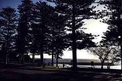 Take Me To The Beach (Daniel E Lee) Tags: cottesloe beach cottesloebeach perth summer australia sunset canoncanonm5 canoneosm5 m5 mirrorless apsc canonefm22mmf2 canon22mmf2 22mm pancake pancakelens naturallight ambientlight photosbydlee photography photoshop lightroom