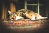Cat relaxing (jordihin) Tags: cat relaxing