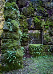 Moss and Ferns (glo photography) Tags: california glenellenca gloriasalvanteglophotography jacklondon jacklondonstatepark northerncalifornia sonomacounty wolfhouse facade ferns green historic mansion moss statepark stone window winecountry
