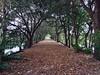 Stroll (sflrunner) Tags: shade trees nature wetlands wakodahatchee florida leaves path