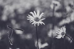 Wild Flowers and Grass (Thelma Gatuzzo) Tags: cerrado minasgerais landscape blossom flower thelmagatuzzo© flor 2016 brasil fleur flora travel wildflowers serradacanastra viagem bloom natureza parquenacionaldaserradacanastra animaissilvestres
