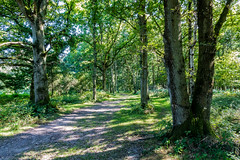 Summer forest (Anthony P26) Tags: ashridgeforest category england flora hertfordshire places travel english british woodland woods forest greatbritain uk unitedkingdom canon1585mm canon70d canon grass trail trees countryside rural greenery nature natural pathway track outdoor landscape tree