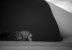 Darkness and light (Joost10000) Tags: blackandwhite monochrome namibia namibien desert tree sosusvlei namibdesert dune sand sanddune africa landscape landschaft beauty light shade minimalism minimalist wild wilderness dawn 35mm film analog travel
