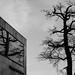 Old Tree - Modern Art
