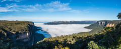 Morning Mist (Rikardo daVinci) Tags: morning cliff mist fog waterfall nationalpark bush bluemountains valley nsw gorge 2015 wentworthfalls