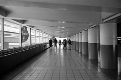 Follow The Path (bhop) Tags: california leica blackandwhite bw film canon 50mm kodak iso400 disneyland f14 trix rangefinder disney 400 anaheim m6 premium themepark screwmount arista v700 filmisnotdead threadmount