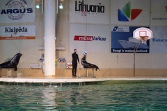 Delfinarium | Dolphinarium