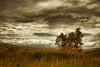 All in one (* landscape photographer *) Tags: italy tree clouds europe flickr magic valle valley nikkor albero paesaggio colline lucania 2015 nuovole senise nikond90 landscapephotographer sinni montalbanojonico salvyitaly