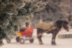 Winter ride!!! (Sudhakar Madala) Tags: winter horse horseride canon eos bokeh december snow christmas christmastree tree bush green red blue yellow colorful nature waiting