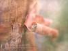 Snail Teardrop (Sylvia Slavin ARPS (woodelf)) Tags: tree paperbark snail teardrop dewdrop water droplet memory dad garden lensbaby velvet