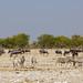 DSC09573 - NAMIBIA 2013