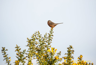 Winter Warbler 1