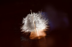 Weightless (Leitratista) Tags: weightless feather float nikond3400 lovephotography hobby macro experiment art learnphotography