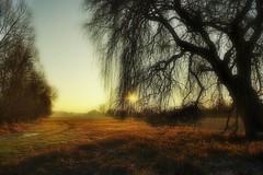 Mon arbre préféré (mamietherese1) Tags: world100f phvalue earthmarvels50earthfaves ngc