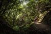 Muir Woods - The Lost Trail (lasse christensen) Tags: dsc7091 usa california muirwoods redwoodforest muirwoodsnationalmonument woman kvinne rødt red