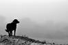(casildaezquerro) Tags: blanconegro blackwhite monochrome monocromatico minimalist minimalista mascotas pets perros animales animalesdecompañia