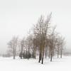 Winter Poem III (Vesa Pihanurmi) Tags: trees winter fog minimalism espoo finland snow nature px3 px32016