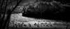 Sur la prairie (gmouret92) Tags: fuji x100t bw nb sardaigne sardinia mouton brebis troupeau sheep