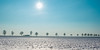my favorite trees (++sepp++) Tags: landscape landschaft landschaftsfotografie schnee wetter winter heiter sonnig sunny graben bayern deutschland de januar january snow bäume trees alley allee gegenlicht backlight backlit sonne sun germany bavaria