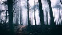 Lifeless Path (Augmented Reality Images (Getty Contributor)) Tags: atmosphere canon contrast creepy fog forest landscape lifeless longexposure nature perthshire scotland track trees winter