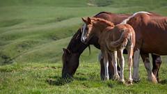 "famille (Nicolas R. ""El Gonzo"") Tags: cheval horse chevaux horses animals animaux animal poulain"