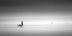 Join the surf (Scott Baldock) Tags: saunton sands beach seascape running dog surfers devon uk