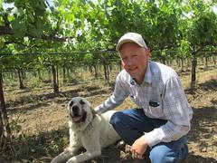 Robert Irwin Rancher (Nancy D. Brown) Tags: california dog great vineyards organic rancher hopland anatolian bonterravineyards robertirwin mendocinocounty pyreneese bonterra livestockprotectiondog anatoliangreatpyreneese