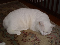 Mystic (universalcatfanatic) Tags: wood pink sleeping cats brown white green eye up stairs cat carpet wooden eyes beige stair floor sleep top rail mat rug curled curl railing mystic lay hardwood laying