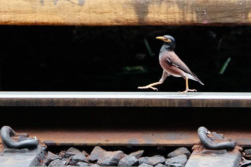 Un oiseau va quelque part, Hua Hin