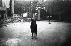 (Max Miedinger) Tags: blackandwhite bw abandoned dogs lens diy blackwhite nikon trix dream developer le 400 xray epson sw nightmare f3 waste genesis developed bianco biancoenero foggia v700 granaio thechamberof32doors xomat lubikon