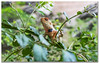 Indian Chameleon keeps a watchful Eye! (FotographyKS!) Tags: travel plants india bird nature beautiful weather animal spider amazing nikon focus outdoor wildlife wideangle species nikkor capture 1735mmf28d chameleon nikondigital indianwildlife kumbhalgarh 1735mmf28 photoborder nikond3300 chamaeleozeylanicus greatwallofindia