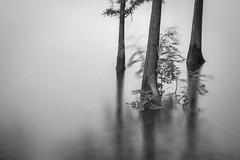 Vision (Picocoon) Tags: china longexposure blackandwhite bw lake tree landscape vision botanic drown hefei