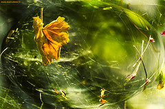 trapped in the spider web (mare_maris) Tags: morning flowers light red summer orange detail macro green nature colors thread lines yellow photoshop garden season leaf trapped cool construction truth colorful europe mediterranean pattern colours shadows graphic stuck symbol sticky spiderweb july line creepy explore greece glossy frame catch inside network cob leafs caught labyrinth trap element materials connections λουλούδια crawlers highperformance 2015 nospider spinneret φύση flowerphotography imperialistic φύλλο κήποσ ιστόσαράχνησ παγίδα nikond5100 maremaris lawsarespiderwebsthroughwhichthebigfliespassandthelittleonesgetcaught