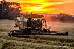 Wheat harvest @ sundown (Thomas DeHoff) Tags: sunset wisconsin wheat sony harvest 740 claas lexion a580